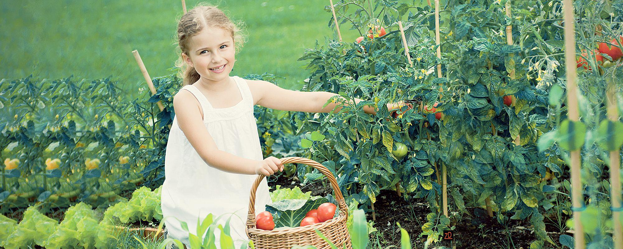 דשנים חדשניים ותוספים חדשים לגינון ולחקלאות