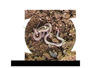 Organic - zalmanson deshanim